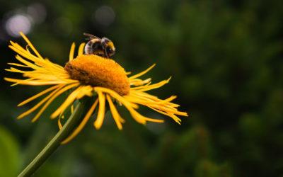 2018: un brutto inverno per le api