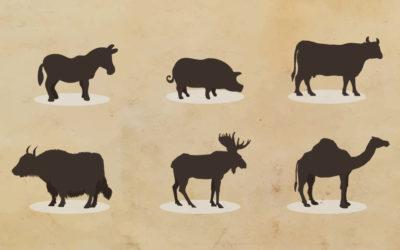 Da quale latte si può produrre il formaggio?