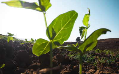Intelligenza artificiale in aiuto degli agricoltori