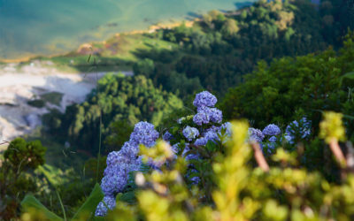 La biodiversità come fattore economico