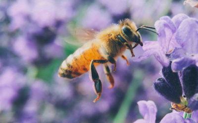 Aree verdi urbane per aiutare le api